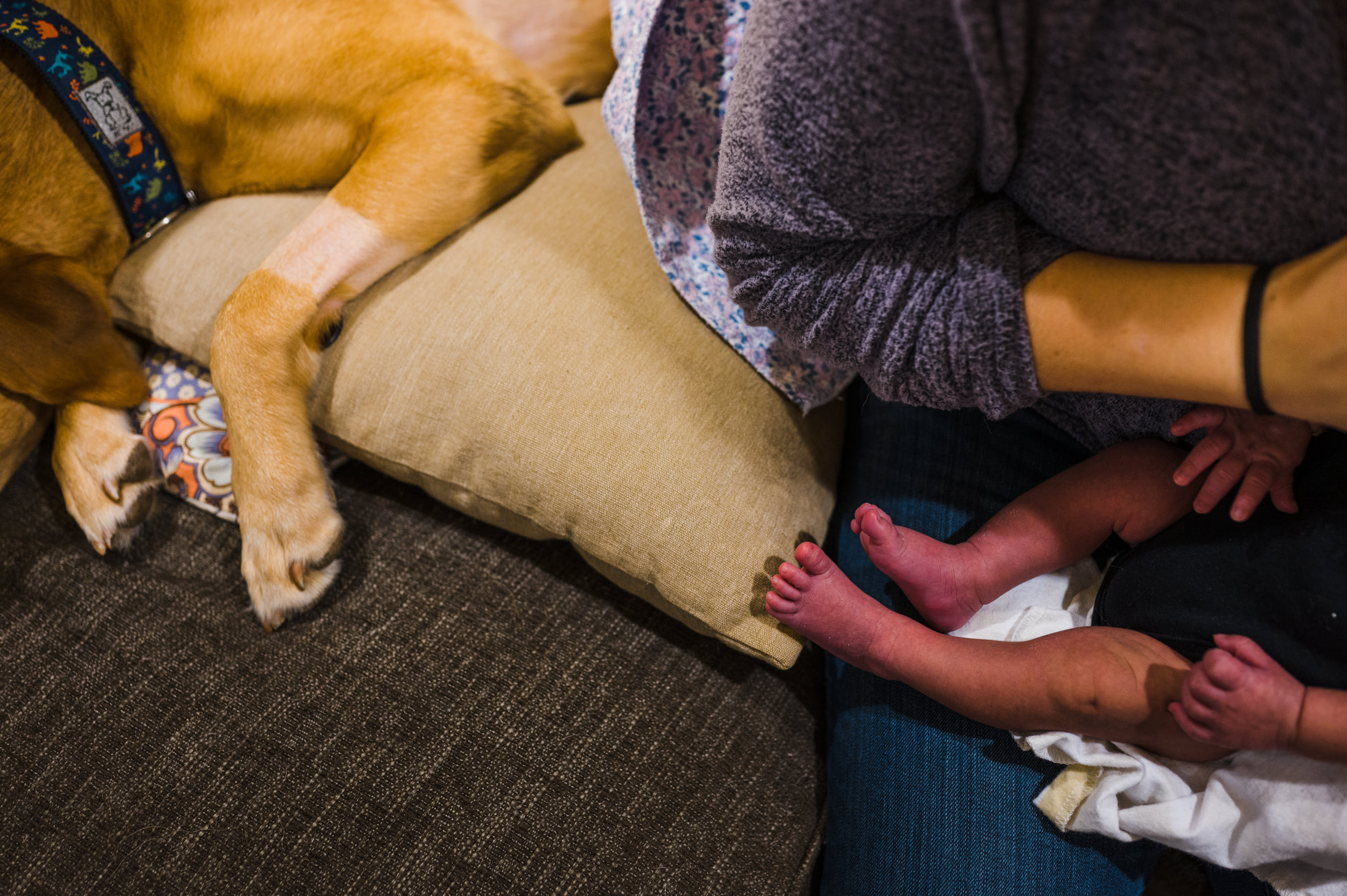 Family dog sleeping beside mom and newborn baby on the couch.