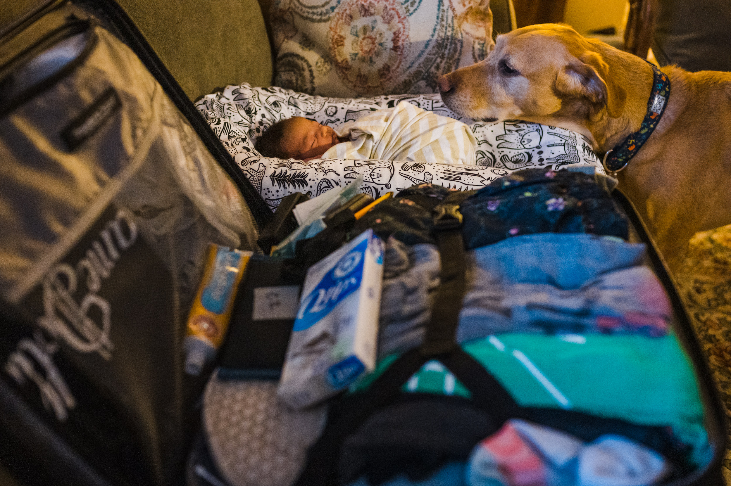 Dog watching over newborn baby boy lying on the couch.