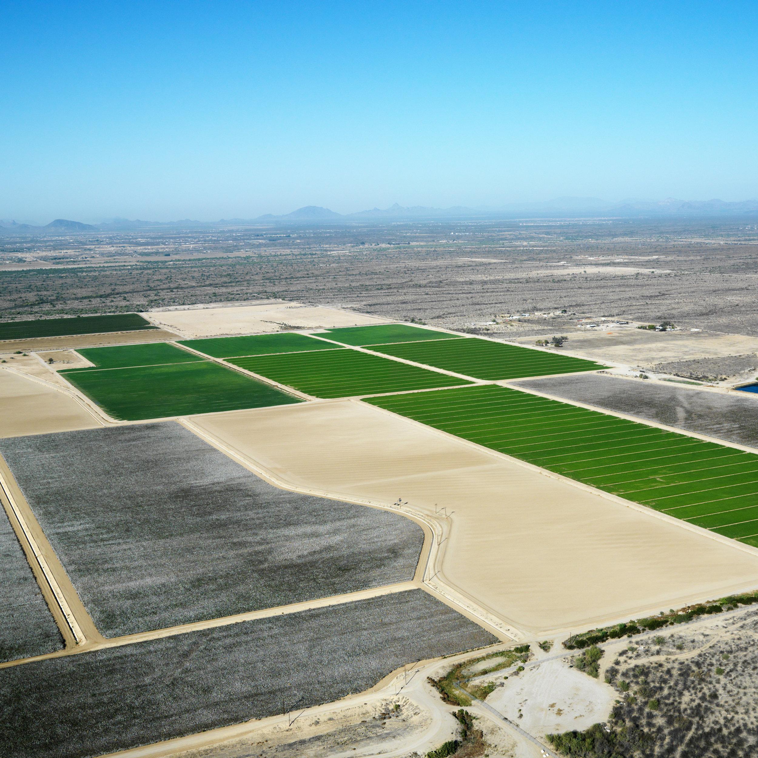 Arizona Agriculture