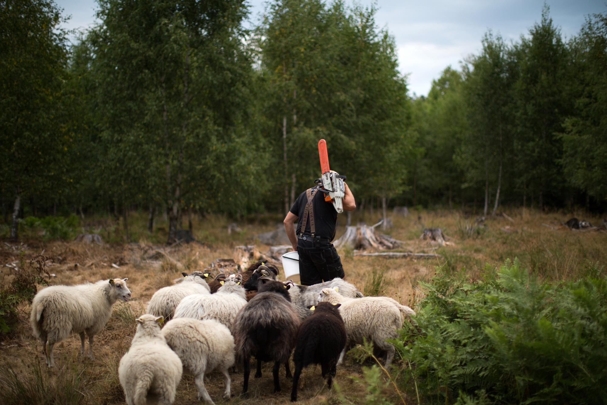 dag og sauene blogsrgb-13.jpg