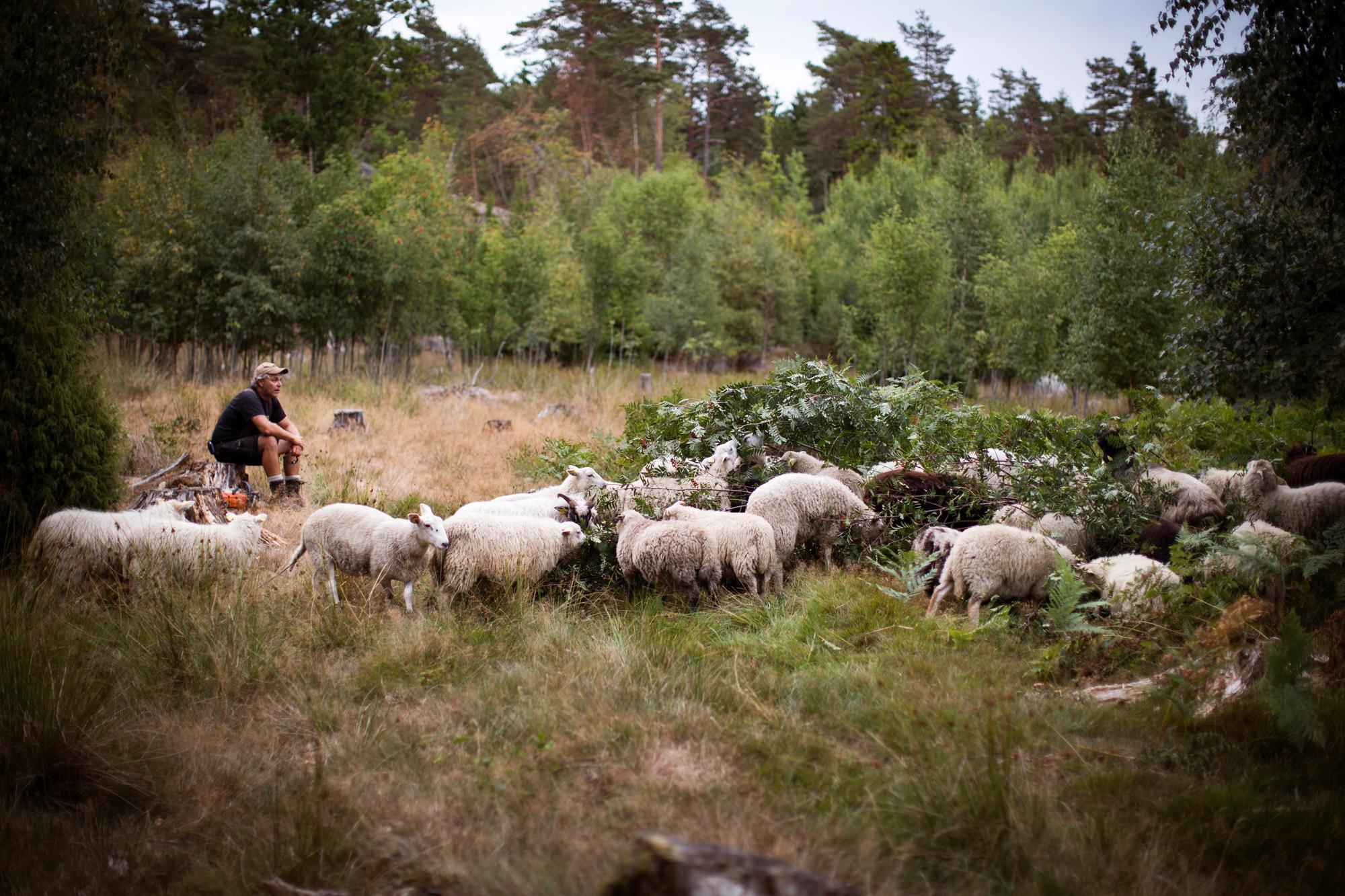 dag og sauene blogsrgb-14.jpg