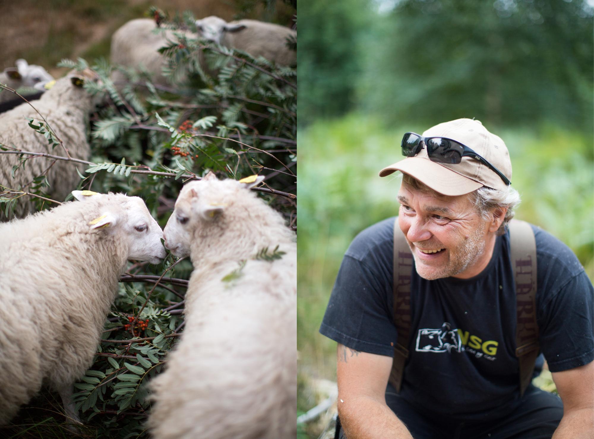 dag og sauene blogsrgb-16.jpg