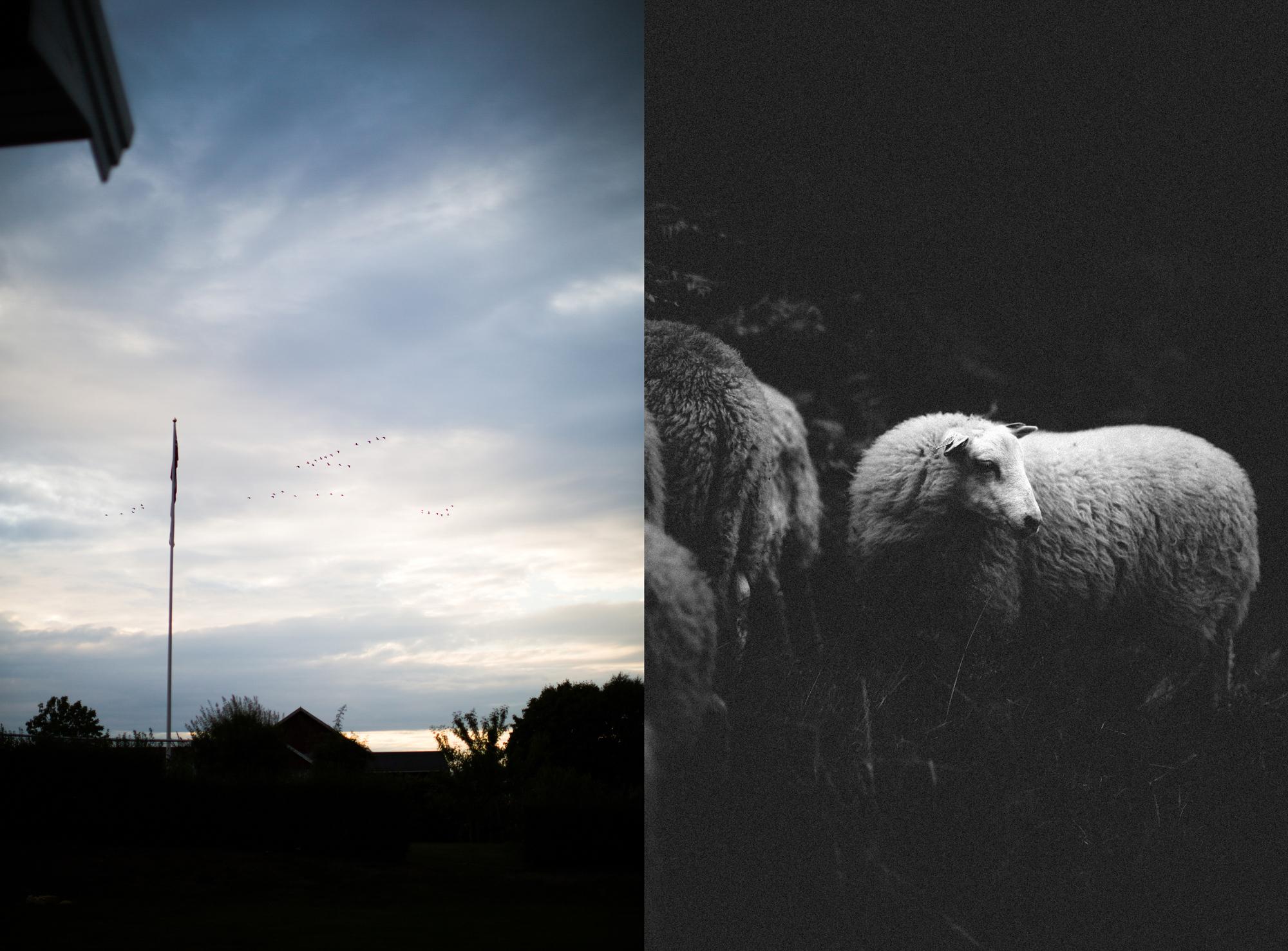 dag og sauene blogsrgb-19.jpg