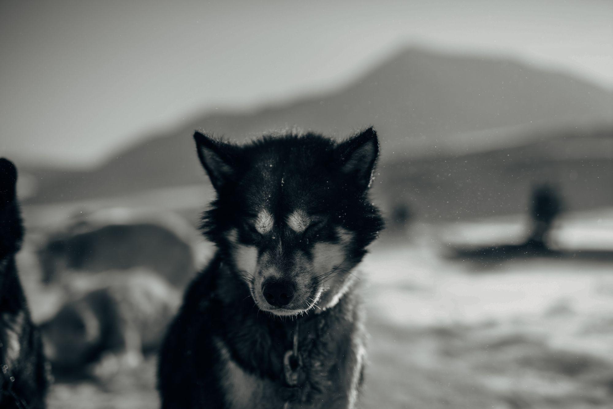 hundetur 2019-70.jpg