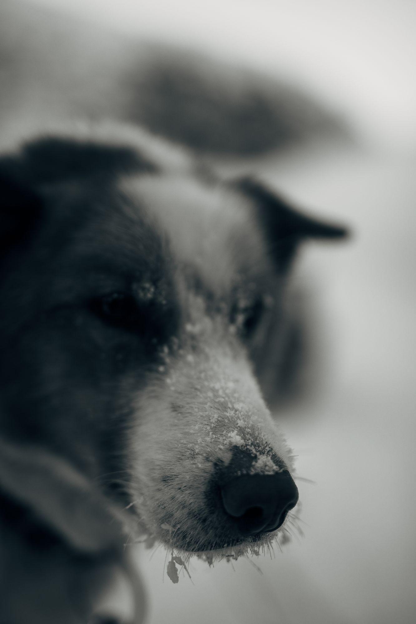 hundetur 2019-128.jpg