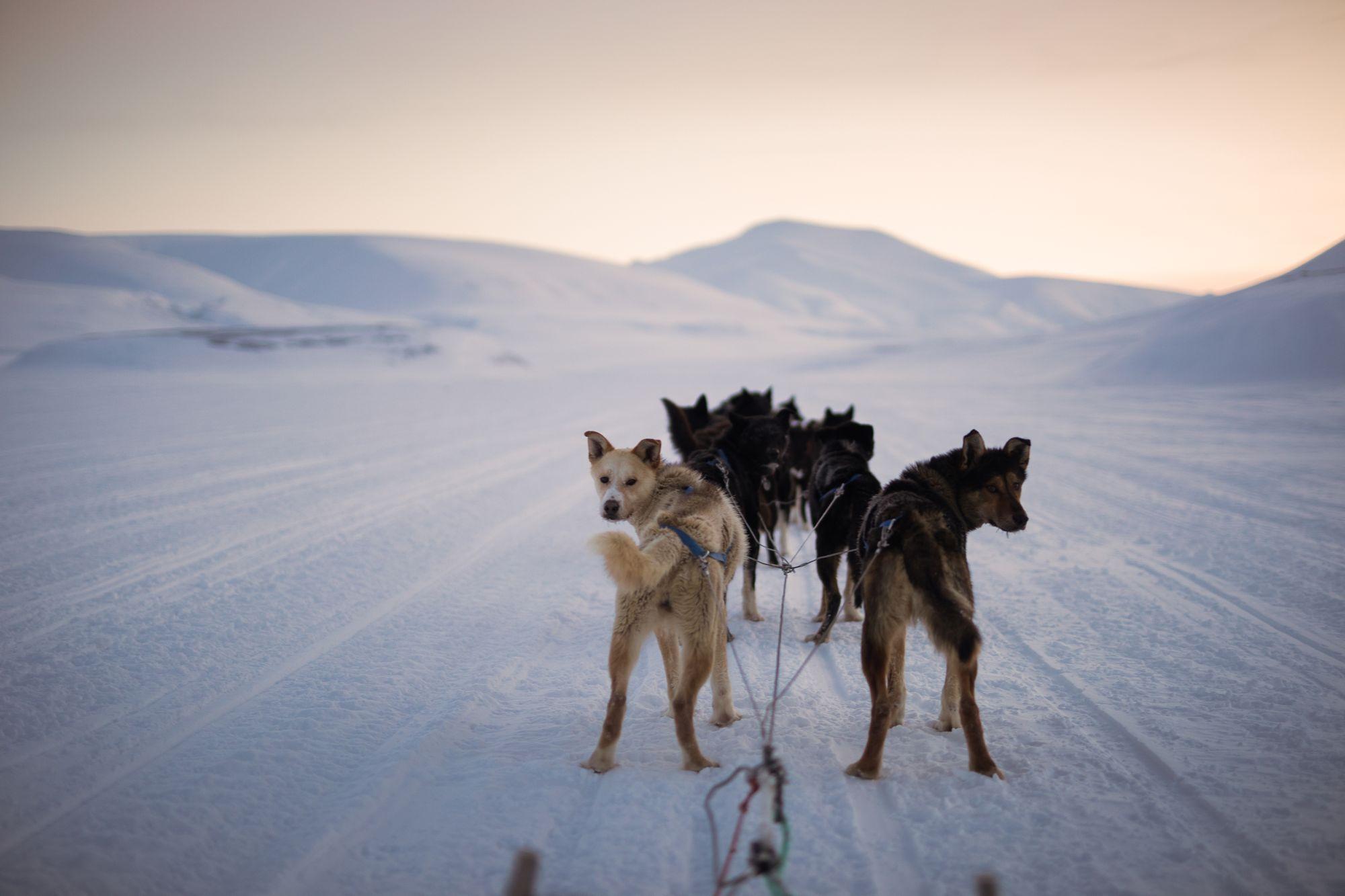 hundetur 2019-155.jpg
