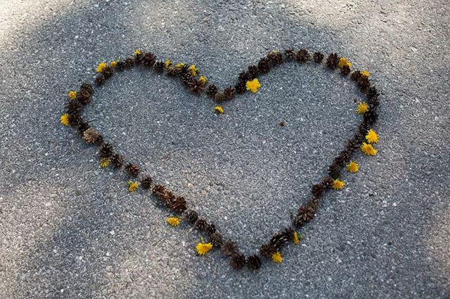 Maria døde som hun levde: Åpen, rå, trassig og full av kjærlighet.  Hun delte dønn ærlig fra livet, alle sidene av det, ikke bare glansbildene. Har du ikke lest bloggen hennes, har du en uoppdaget skatt tilgode: http://www.wildandfree.no / @progrocket  Fredag 31. mai sa vi farvel. Våre minneord til Maria ble visket til oss av vinden, av en kjent stemme. Ordene er også til akkurat DEG.  Takk, elskede Maria, for at du åpnet villhjertet ditt for oss og viste oss hvordan vi skulle åpne våre. To ord står igjen: Takknemlighet og kjærlighet! ❤  Vi ses igjen.  Kjærlighet fra Guro & Mona ❤  #linkibio #livet #guroogmonings