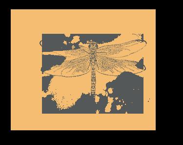 Dragonfly illustration - sRGB@0,75x.png