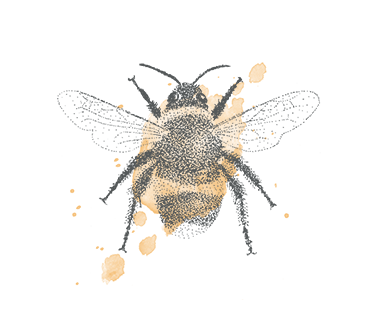 Bumble bee illustration - sRGB@0,75x.png