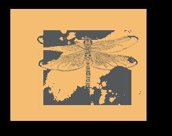 Dragonfly illustration - sRGB@0,5x.png