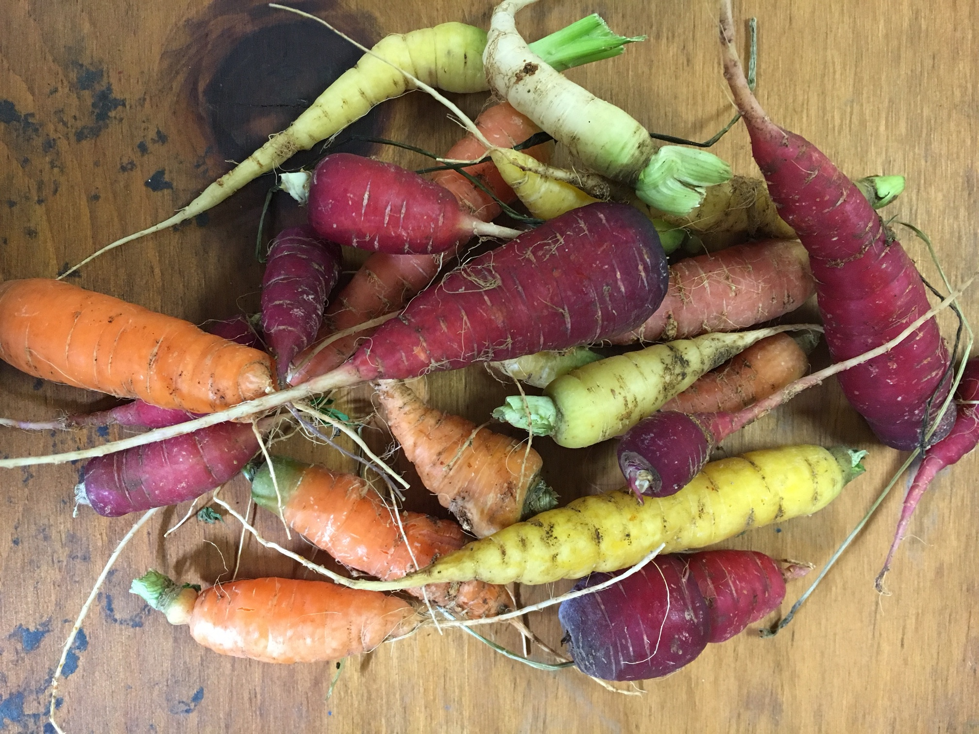 Carrots harvested  from our school garden!