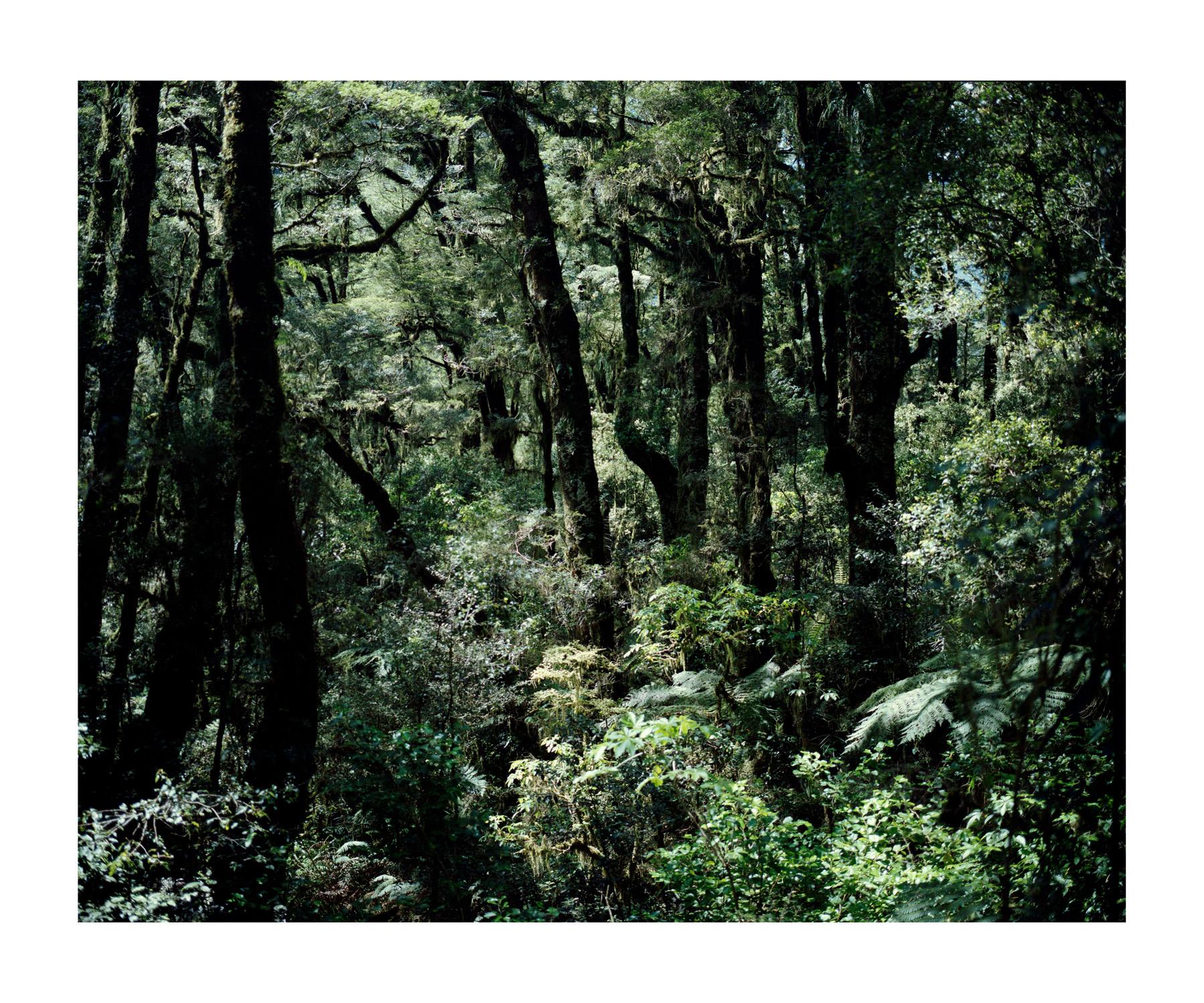 NZ_WEB_009.jpg