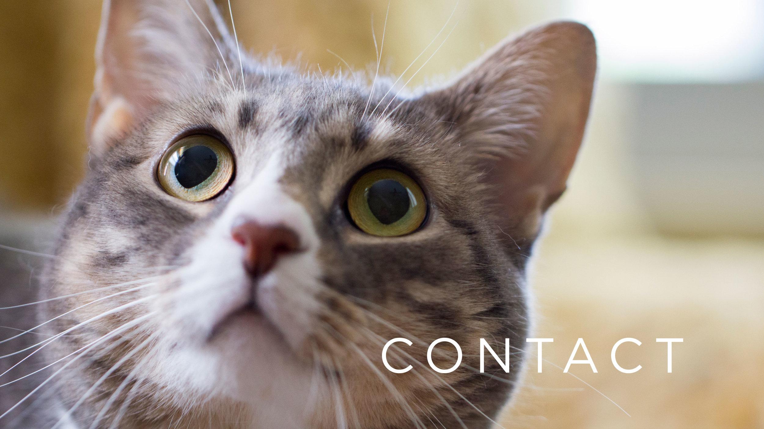 Cat-Face-Website.jpg