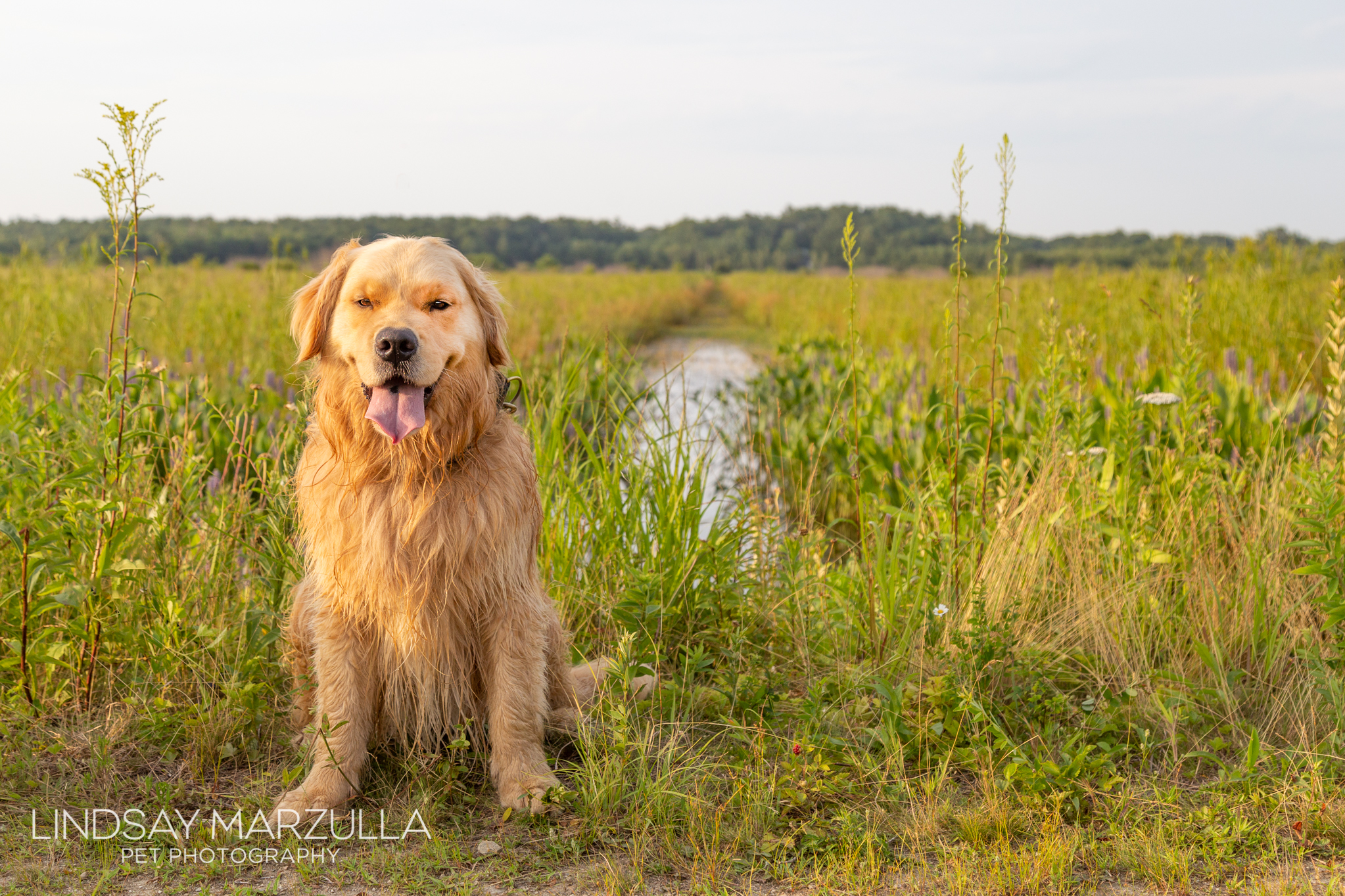 Koda posing by the marsh.