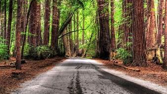 tree road.jpg