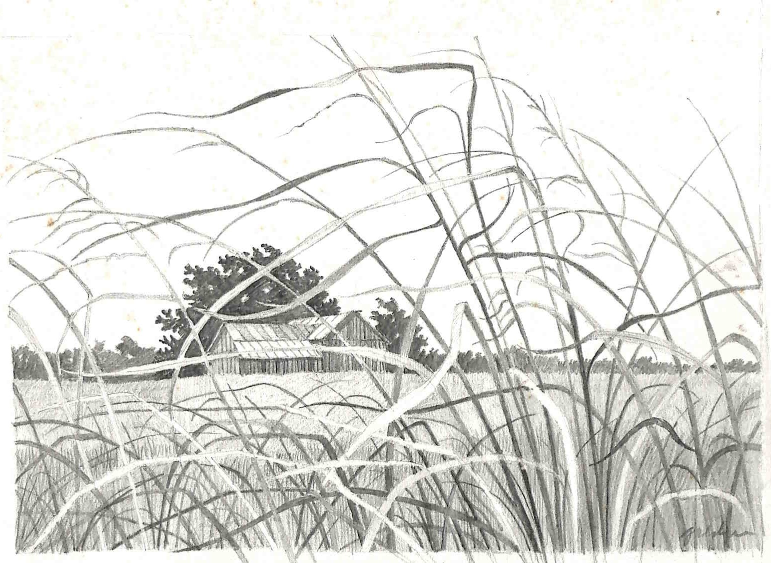 SOLD - Farm Weeds