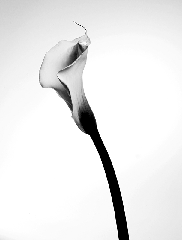 Calla II - # 1/25