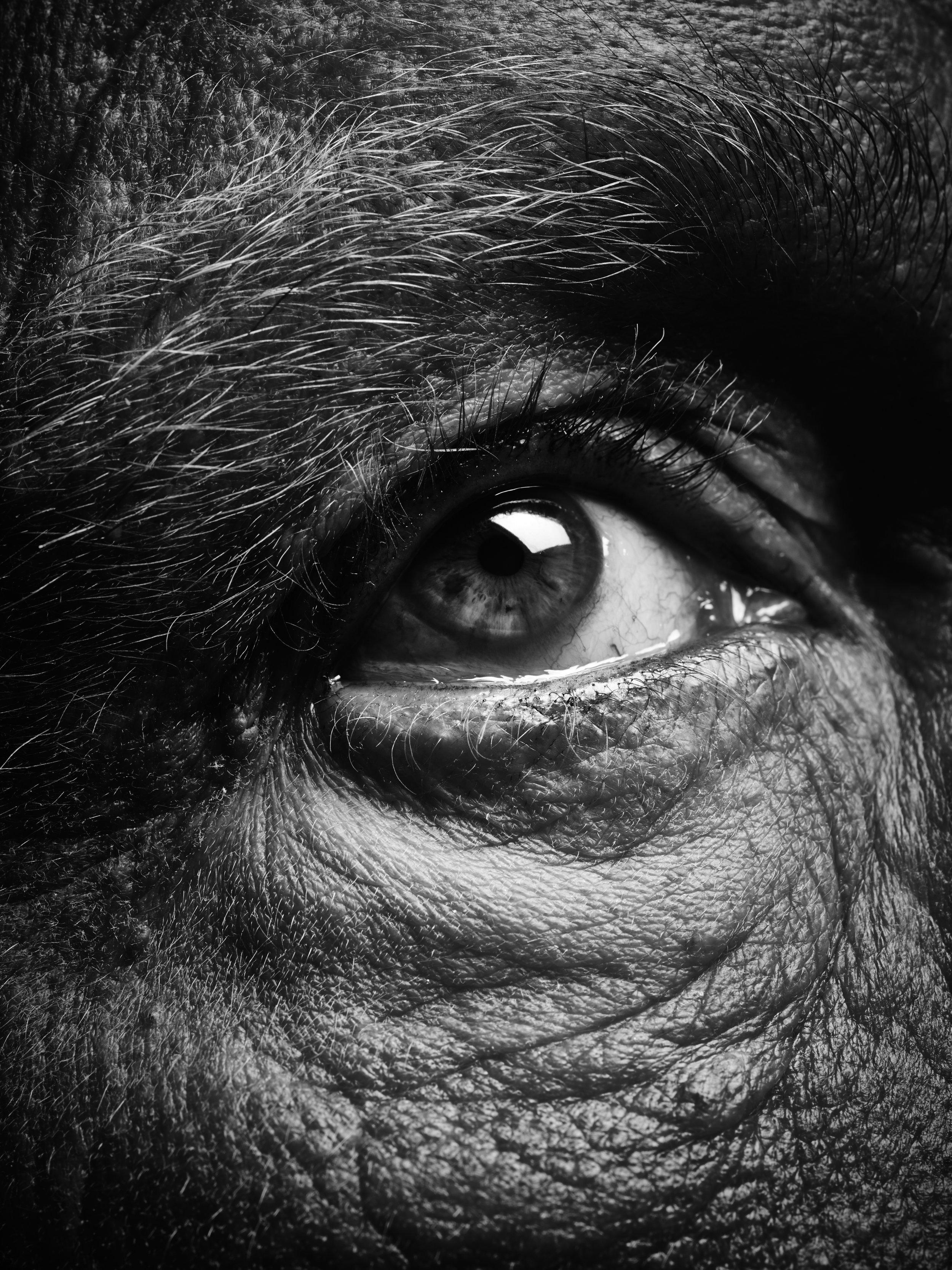 Bill Brandt / Eyes (1960-1964), 2014