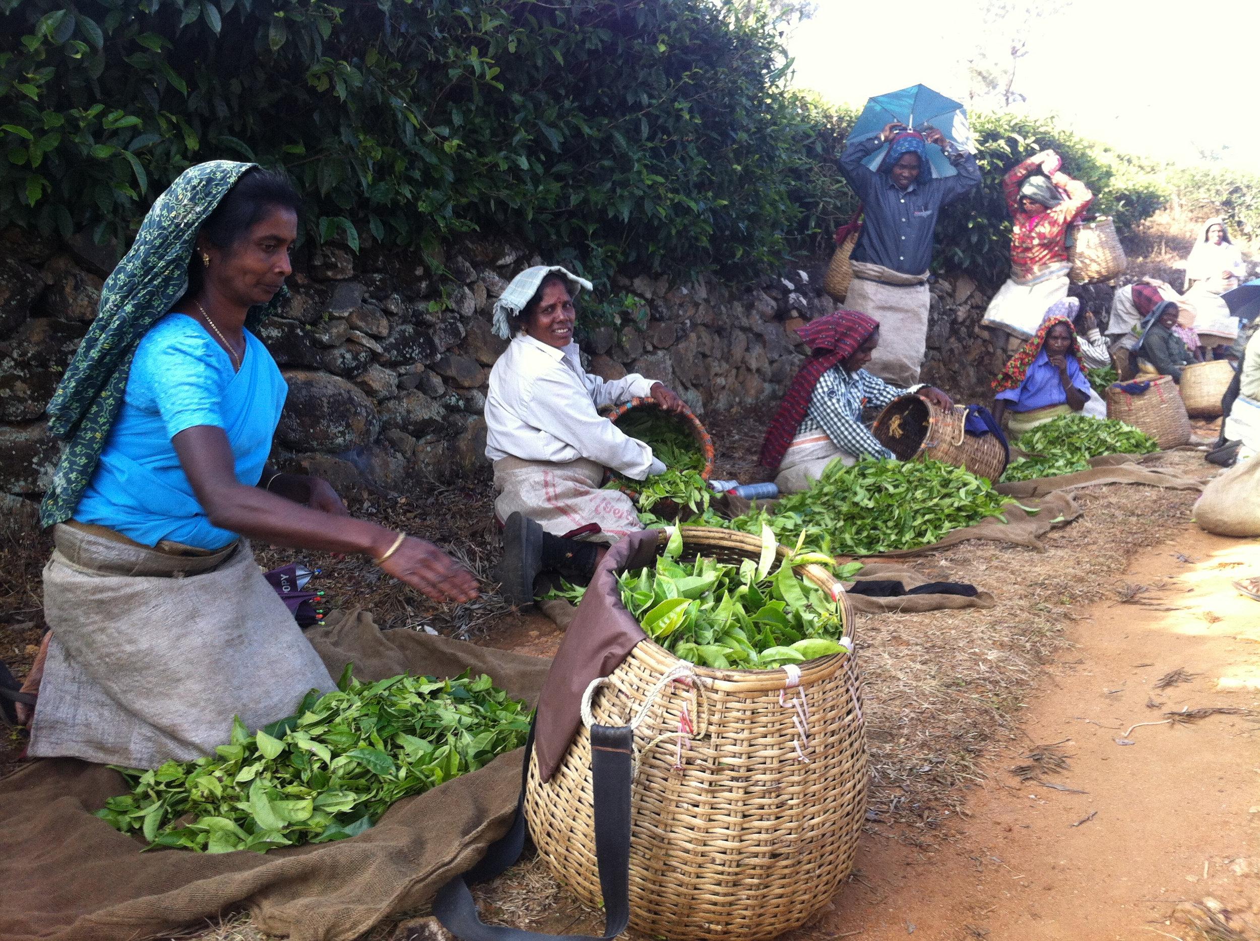 J1ii Tamil tea workers 2.jpg