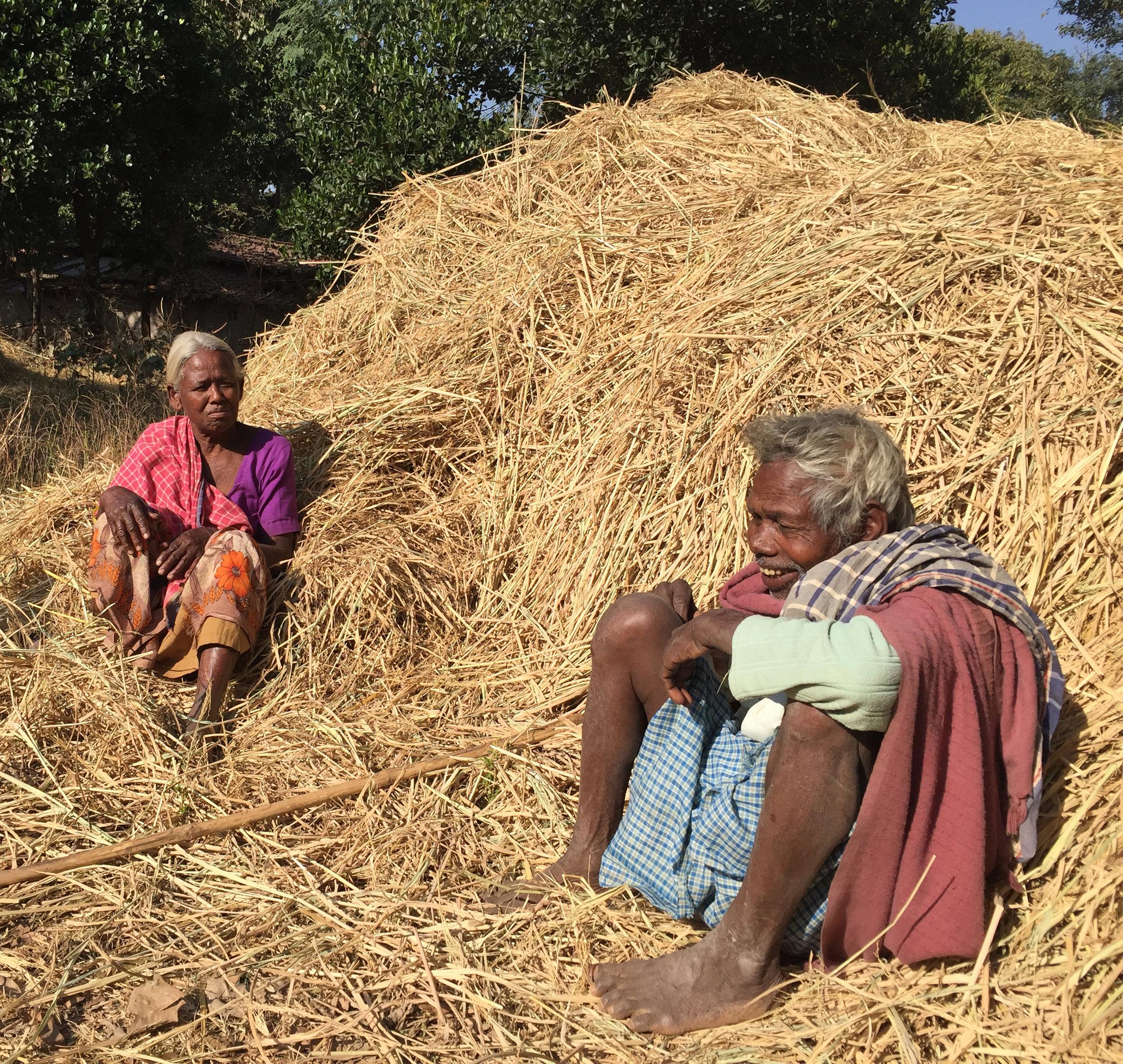 C3i Munda Adivasis cultivating rice 1.jpg