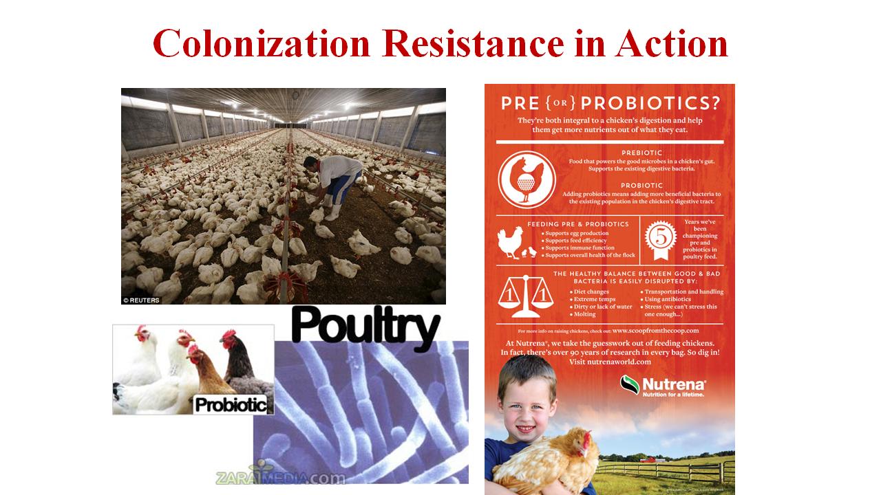 colonizationResistanceInAction.png