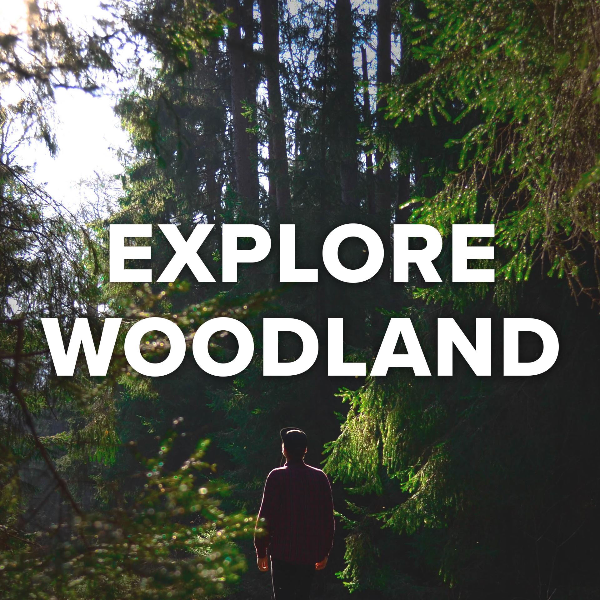 Explore Woodland.jpg