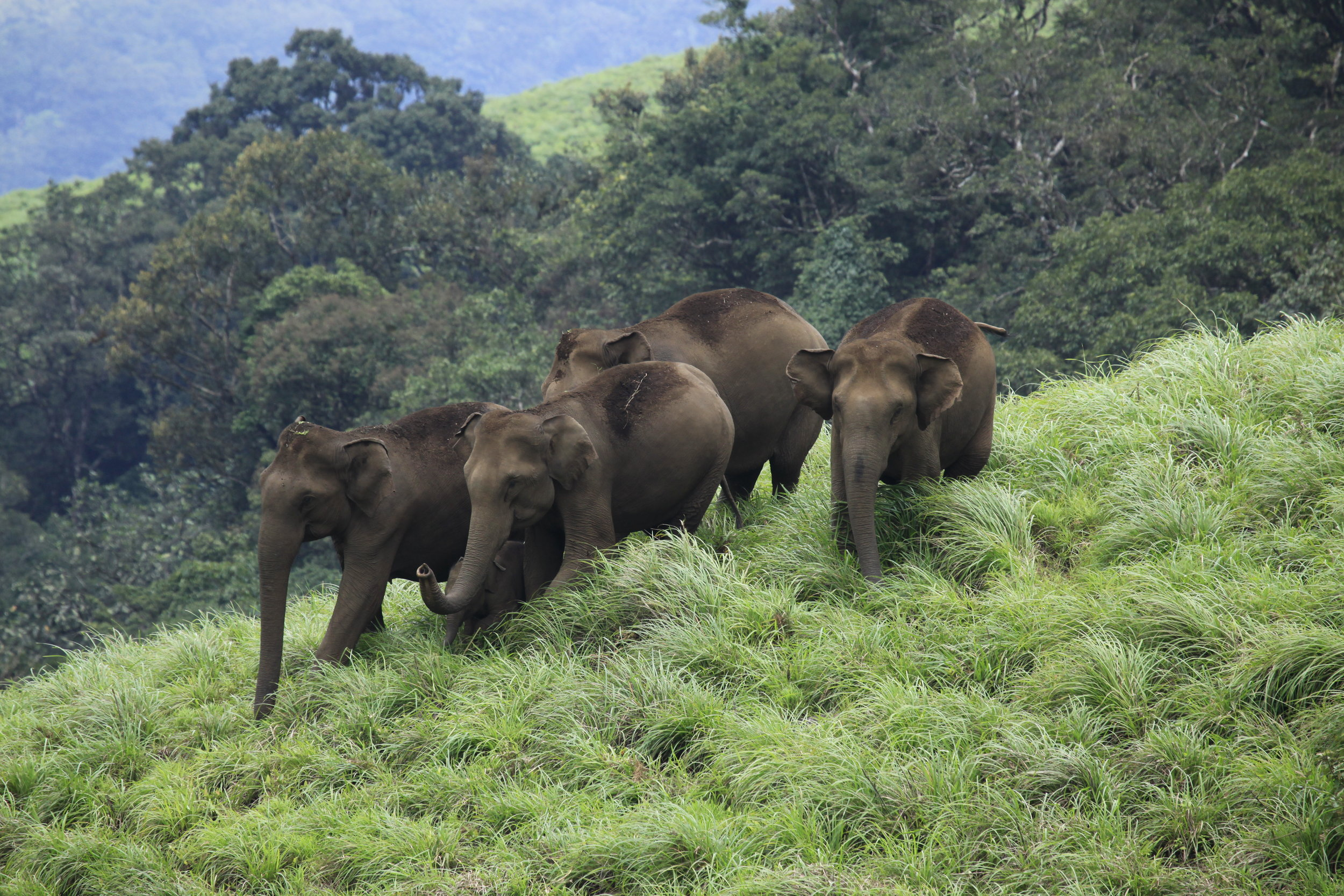 Wildlife Thekkady