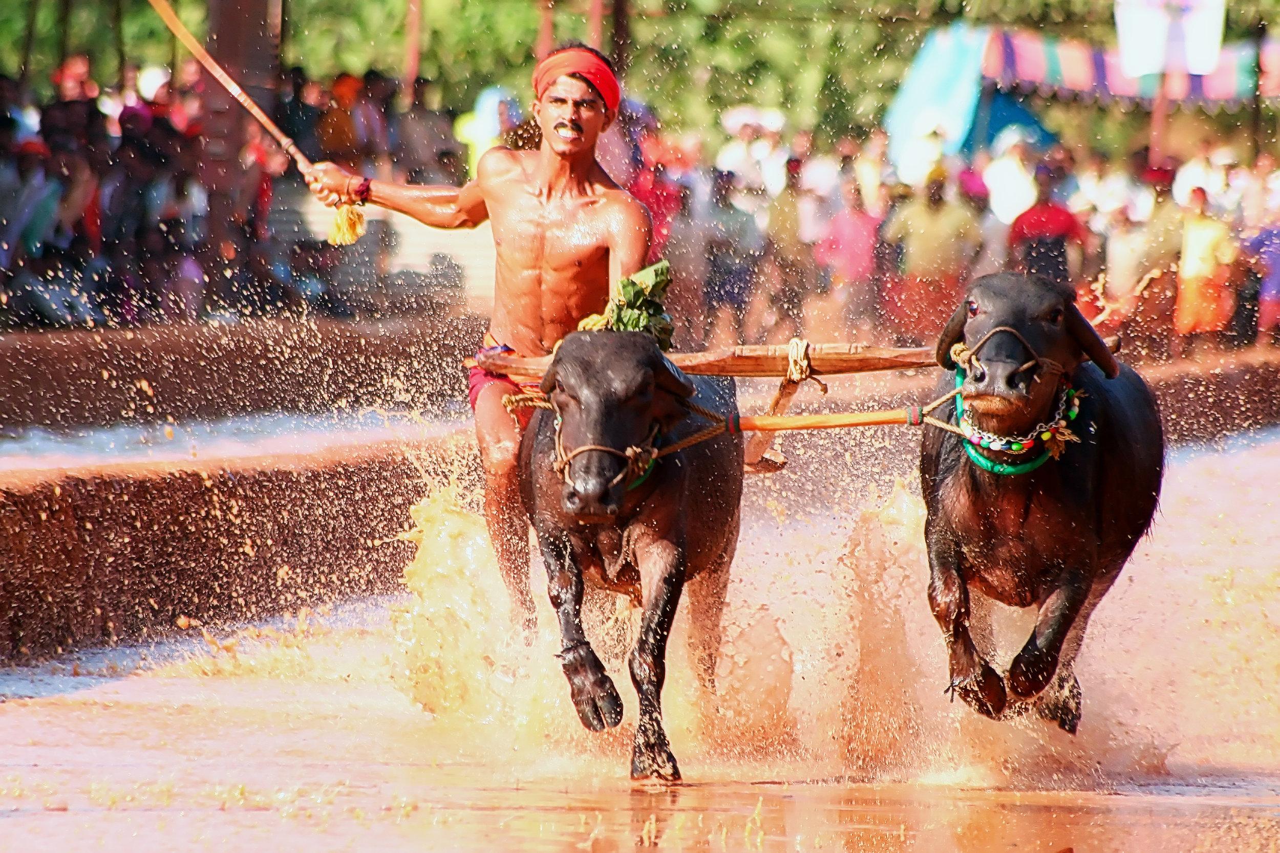 Kambala Rural Sport, Mangalore