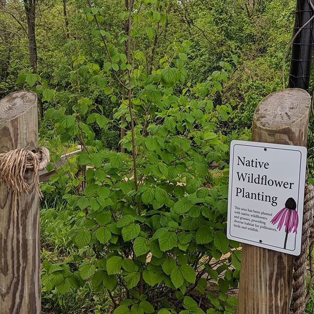 All of the rain is helping our native plants grow nicely. Make sure to check out Natureplay at BCM in the park.
