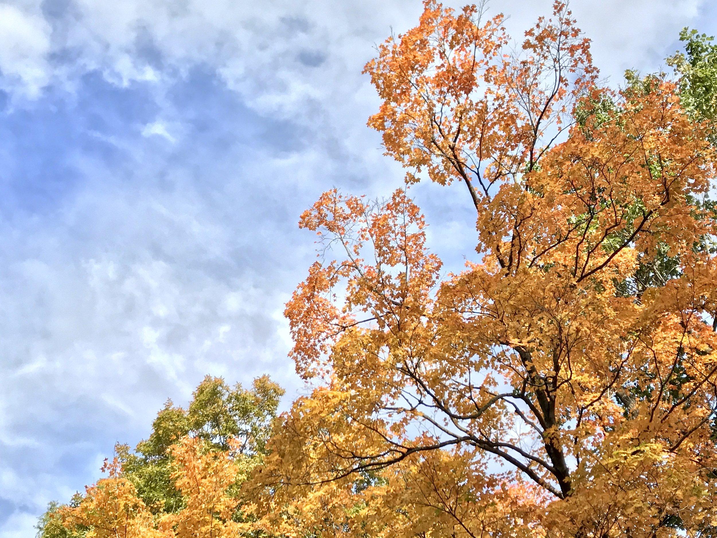 Fall in Washington, DC