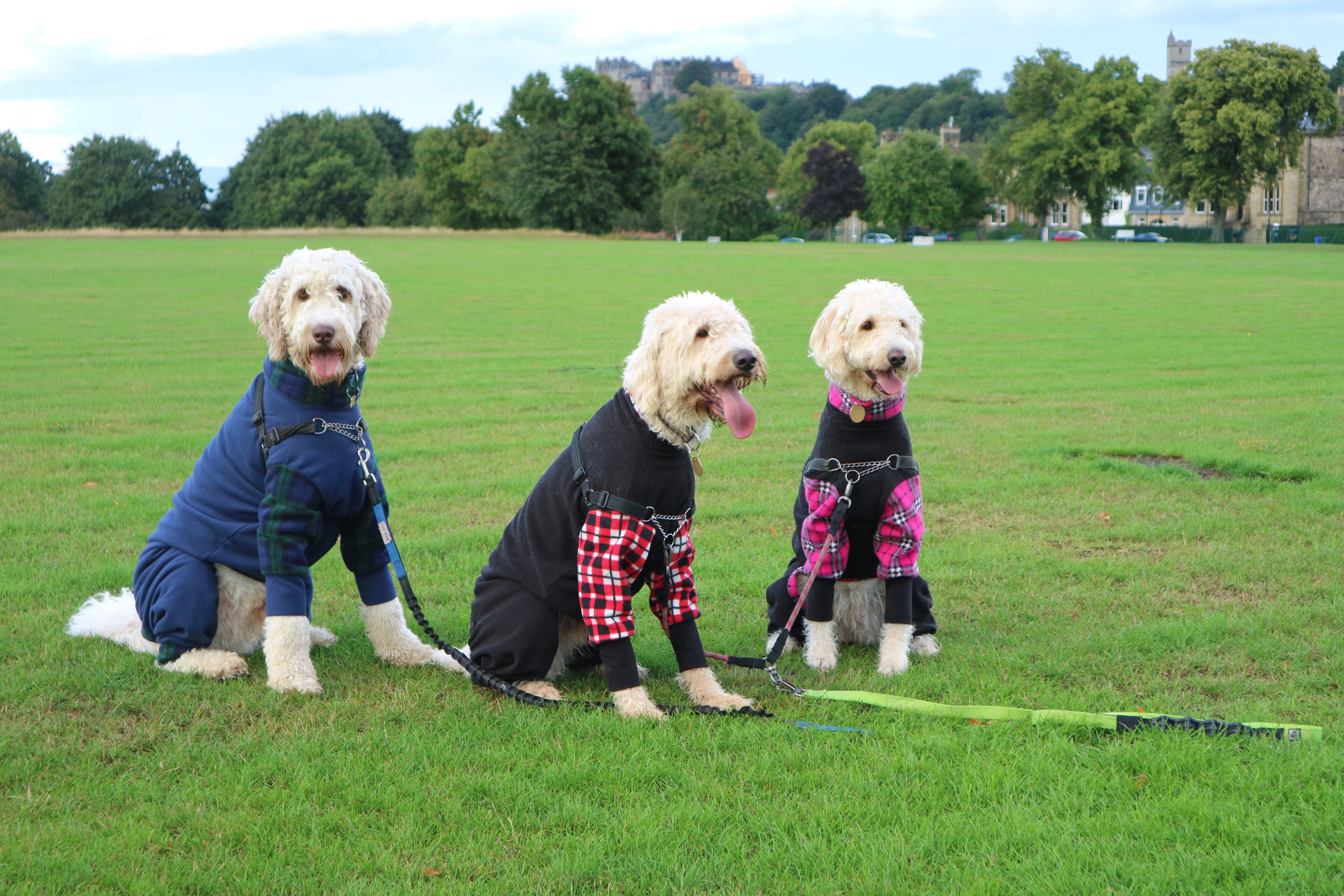 Angus, Hamish and Daisy resting in the King's Park, Stirling after a busy modelling session in some Mucki Mutz body suits!!