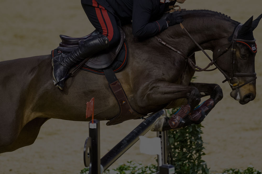 equestrian bookings -