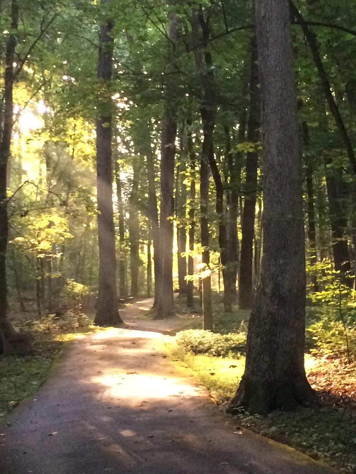 walking trail walk and talk therapy malvern pa