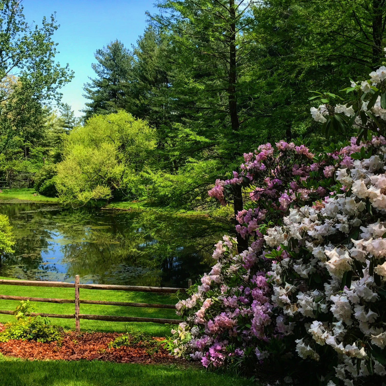 pond walk and talk therapy women malvern pa