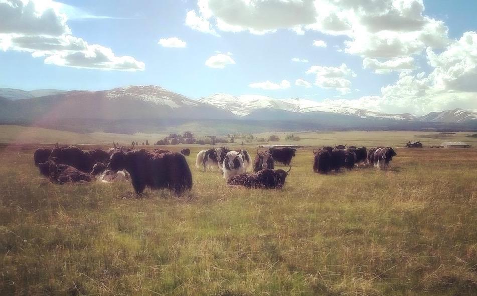 Photo By Daniele Garner of    Pettee Ranch