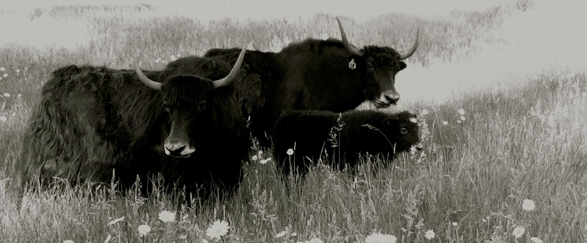 Photo by Su Cowen of  Sisu Ranch