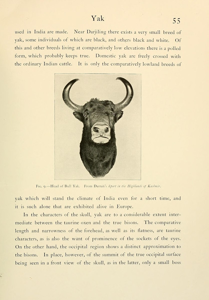 Wild_oxen,_sheep_and_goats_of_all_lands,_living_and_extinct_(Page_55,_Fig._9)_BHL9370005.jpg