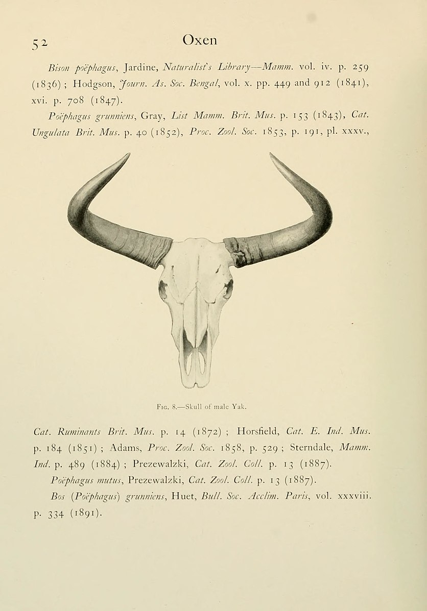 Wild_oxen,_sheep_and_goats_of_all_lands,_living_and_extinct_(Page_52,_Fig._8)_BHL9370002.jpg