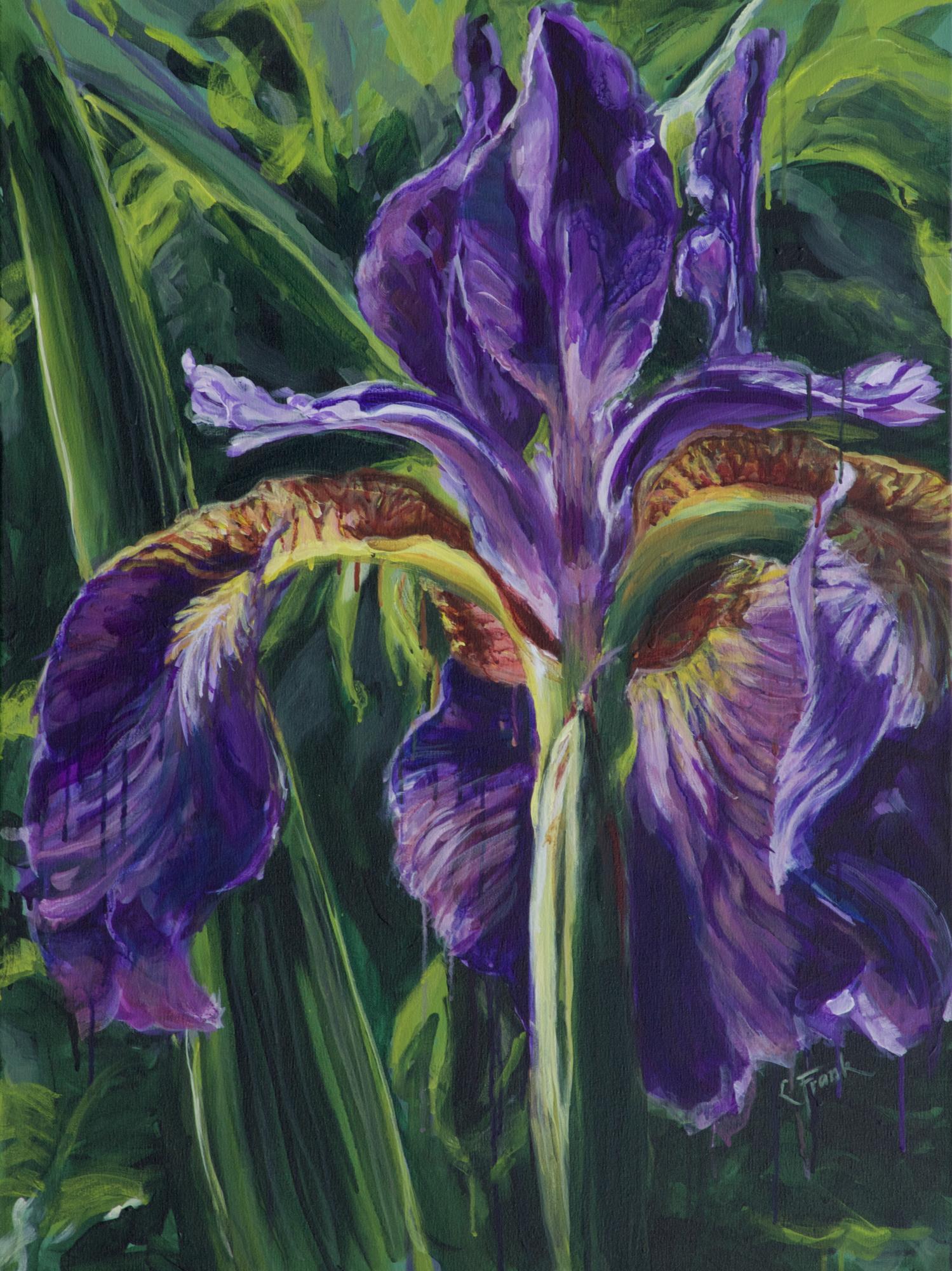 Purple Iris, Weir Farm