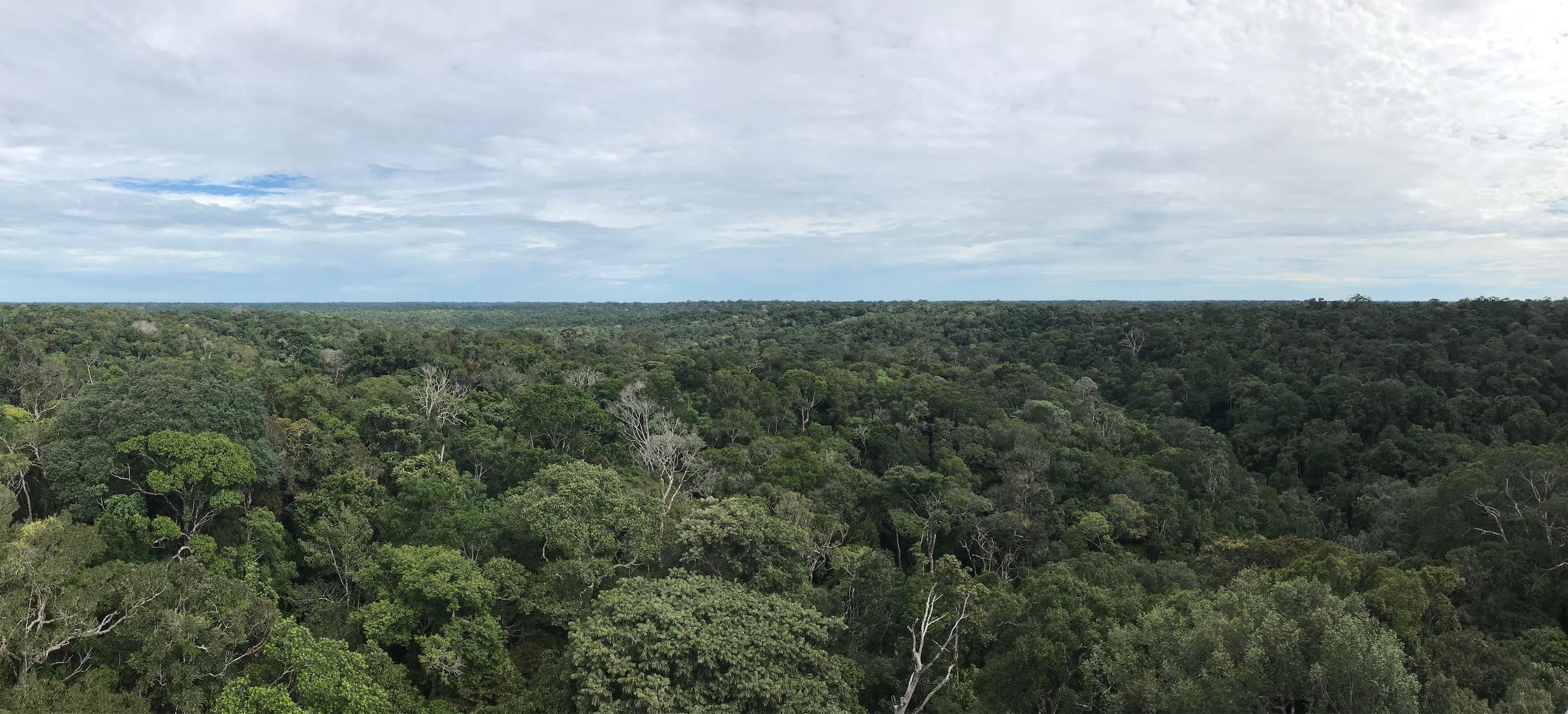 Manaus 2.png