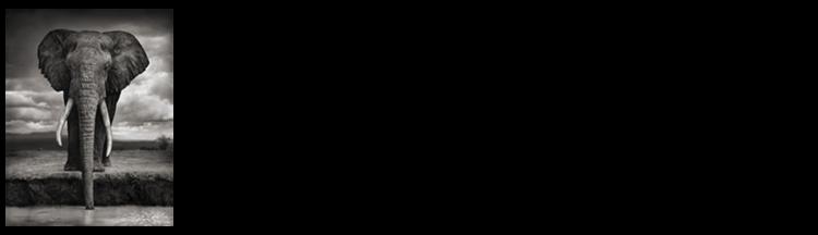 logo-BLF-horizontal-medium-small-elephant-01-800x230.png