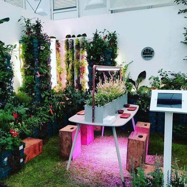 Garden complete 🌹🌹🌹 . . . . #rhs #urbanfarmer #urbangrow #urbanfarm #plantsmakepeoplehappy #foodwaste #sustainable #gardening #garden #design #photography #london #londonist #londonfood #hydroponic #hydroponics #aeroponics #growyourown #veganfood #verticalfarming #chelseaflowershow2019 #chelseaflowershow  @the_rhs @rhs_chelseaflowershow @bbc @themontydon @cityharvestlondon