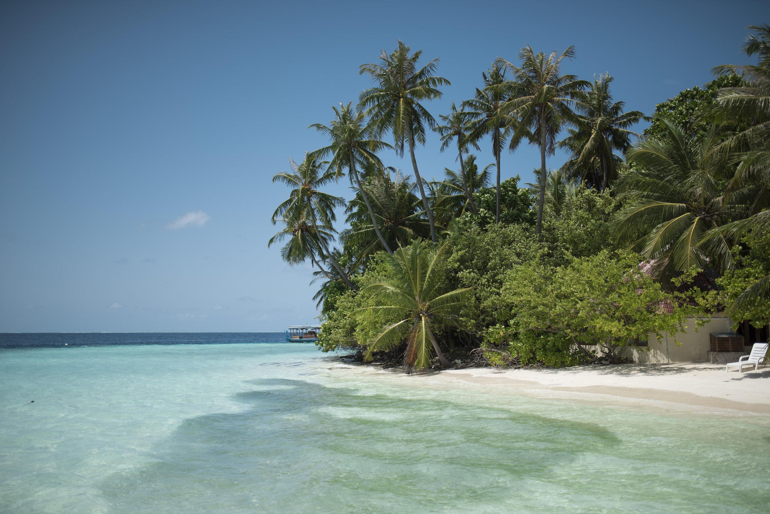 BIYADHOO ISLAND RESORT   Maldives    Images / Fact sheet / Video