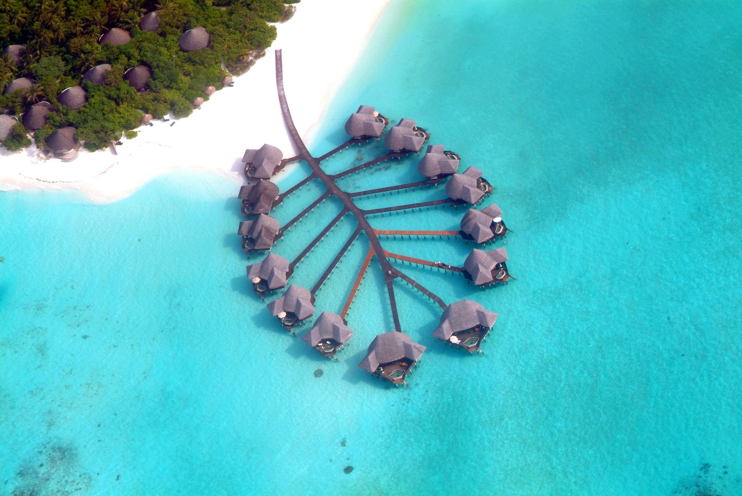 COCO PALM DHUNI KOLHU   Maldives    Images / Fact sheet / Video