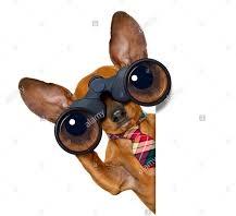 dog look.jpg