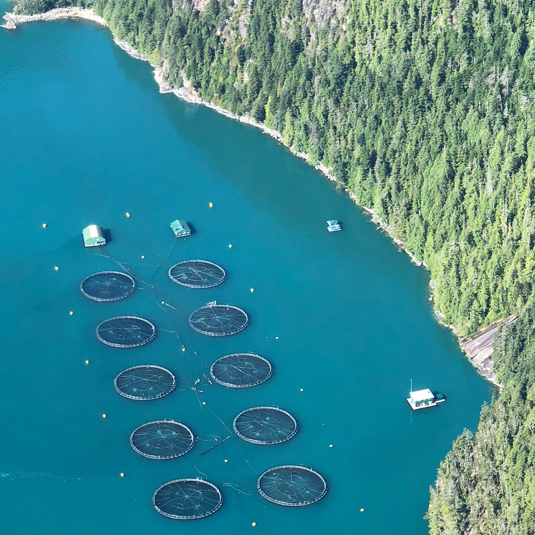 fish farm.jpg