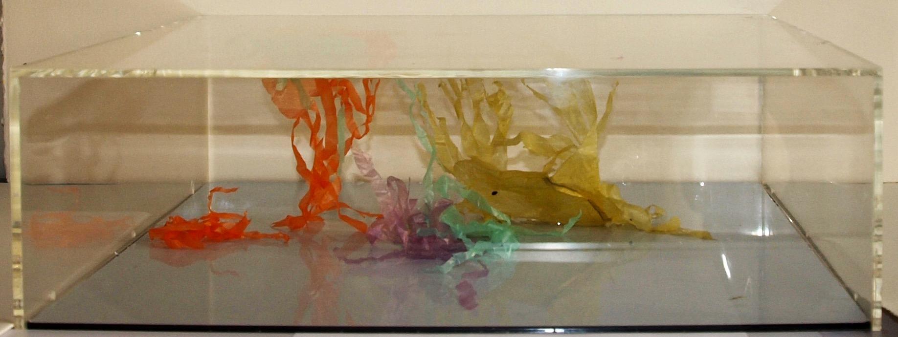 L'aquarium des méduses 80/60  2009