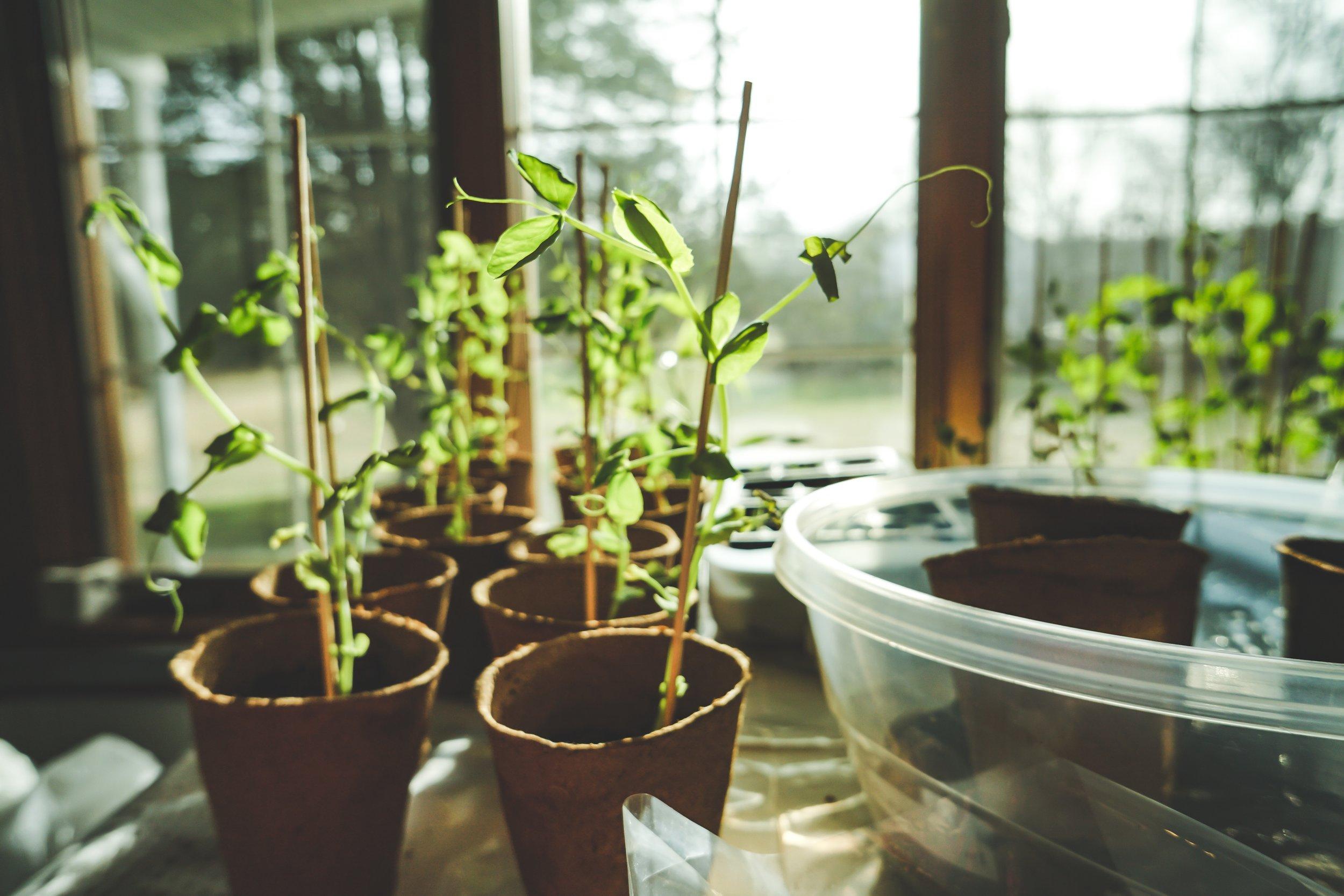 daylight-greenhouse-grow-1105018.jpg