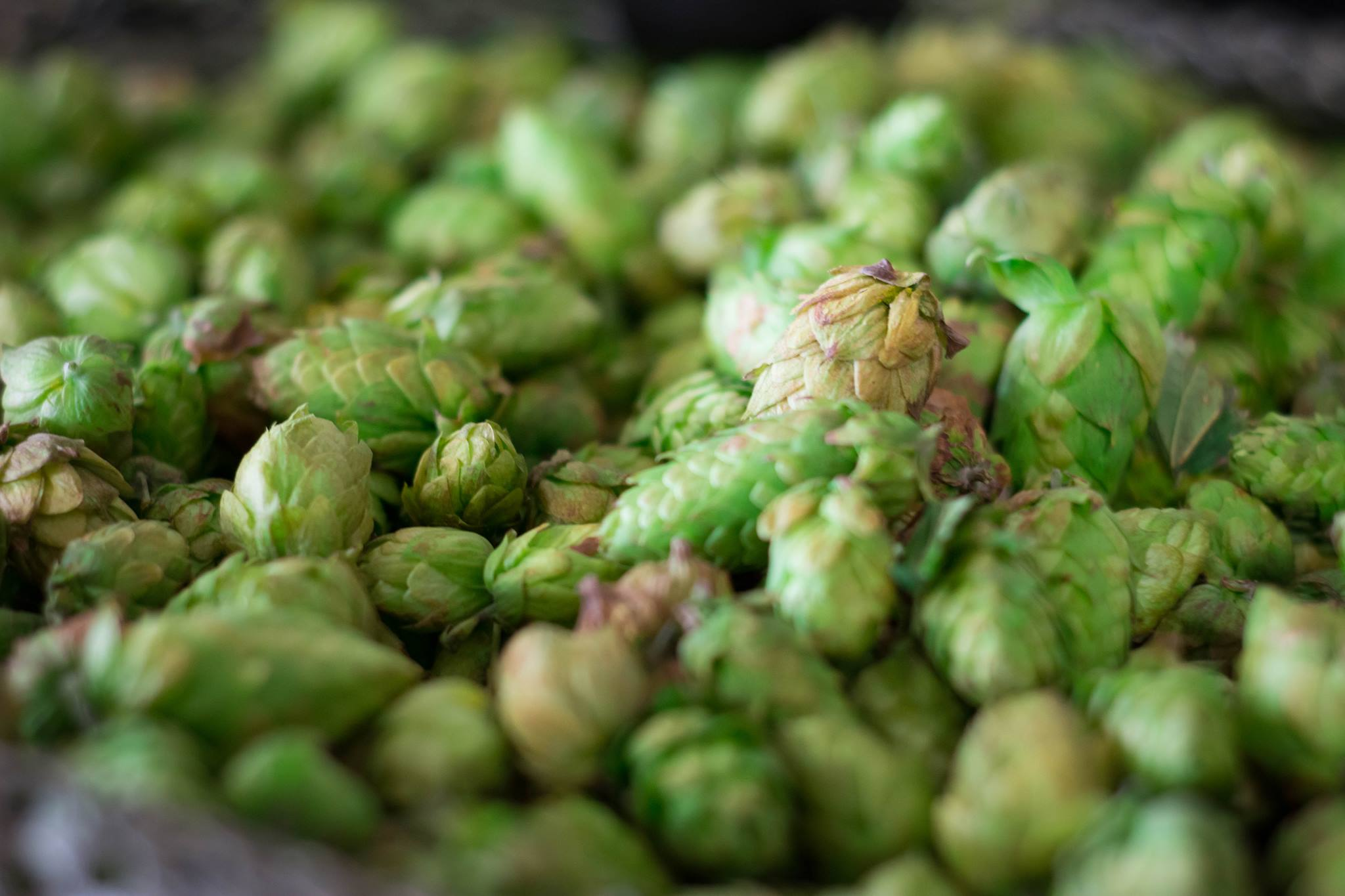 Brewery Blog -