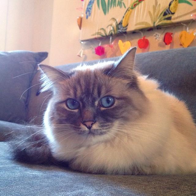 DFS Orbit sofa cat